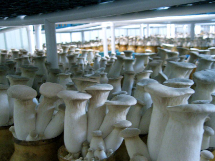«Маслянинское лукошко» запустит тестовое производство в декабре